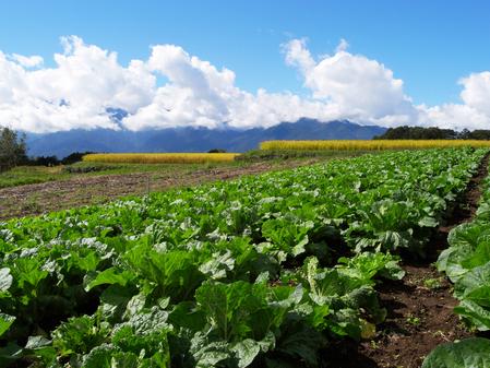 有機野菜 有機果物 特産品 通販 愛知県 野菜保存